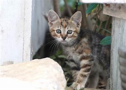 Cats Pets Feral Cat Pet