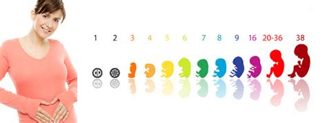 schwanger werden in der schwangerschaft schwangerschaft wochen monate berechnen 26 wochen schwanger so viele monate babyzauber r
