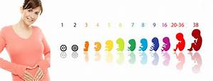 Schwangerschaft Wochen Monate Berechnen : gesund schwanger ~ Themetempest.com Abrechnung