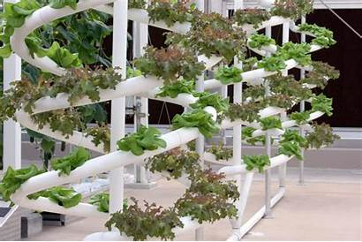 Plant Growth Works Hydroponic Disney Kamu Bisa