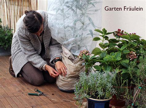 Pflanzen Winterfest Einpacken by Balkonpflanzen 252 Berwintern