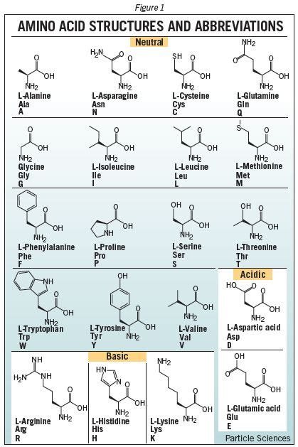 Amino Acid Structures and Abbreviations