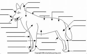 Label Dog Anatomy Printout
