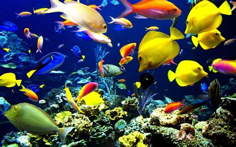 fish wallpaper  background image  id