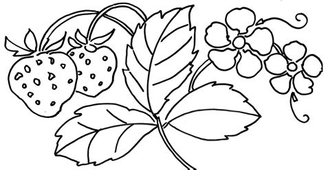 mewarnai gambar pohon berbuah