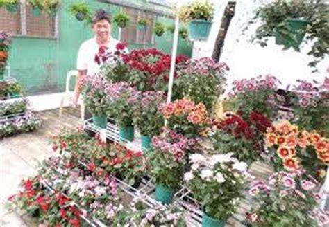 bisnis jual beli tanaman hias tanaman bunga hias