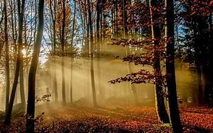 Nature, Landscape, Sunrise, Sun, Rays, Forest, Fall, Leaves, Mist, Sunlight, Trees, Morning