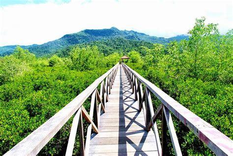 hutan mangrove trenggalek azizalkayis