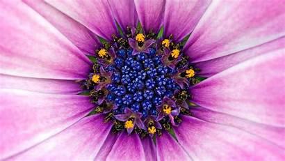 Purple Flower Amazing Definition Wallpapers 1080 1920