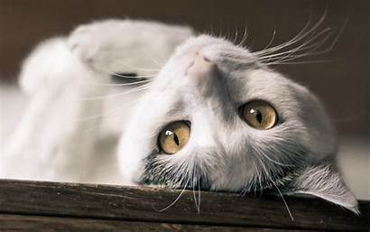 Cat Superb Wallpapers Cats Windows Google Desktop