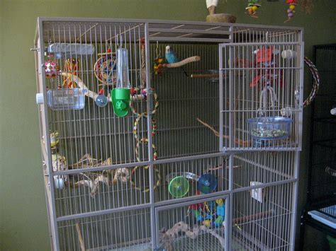 sugar glider cage budgie cages how to set up your parakeet s cage with toys