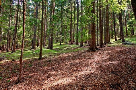 delle volte testo giornata mondiale delle foreste nuovo testo unico forestale