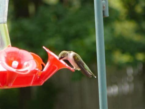 46 Best Our Backyard Birds Images On Pinterest