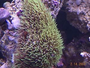 Scott's Soft Corals