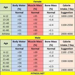 Body Muscle Mass Percentage Chart
