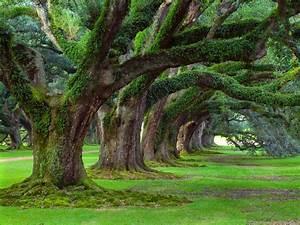 Amazing Nature Wallpapers, Beautiful Nature HD Live ...