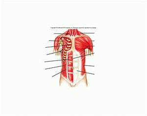 Muscles Of The Anterior Chest