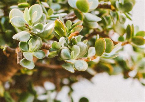 Jaunumi - Bonsai Tree Garden