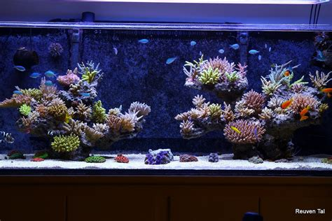 Reef Aquascaping by Featured Reef Reuven Tal S Reef From Israel Reef