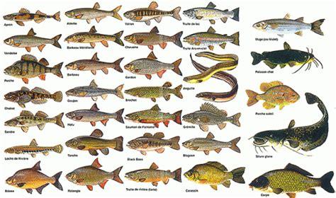 au bureau begles les poissons d 39 eau douce