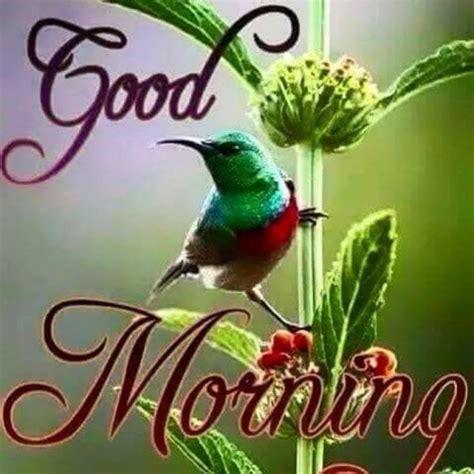 good morning parrot