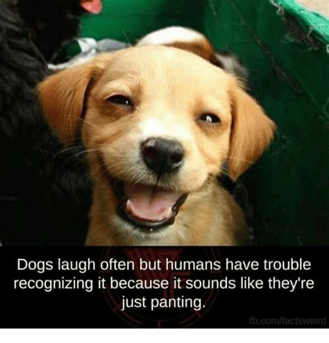 Dog Laughing Meme - dogs laugh often but humans have trouble recognizing it because it sounds like they re just