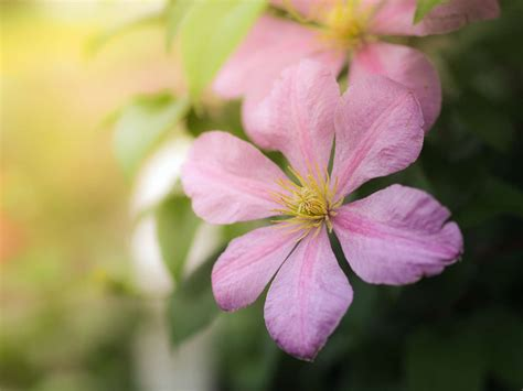 tips  fantastic flower photography olympus