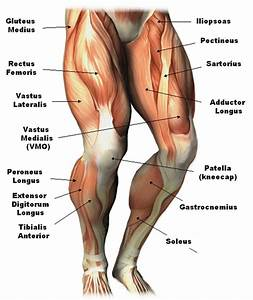 Lower Leg Tendon Anatomy