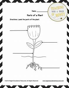 Freebie  This Freebie Contains Three Tiered Templates For Labeling A Plant
