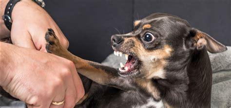common bad behaviour traits  dogs  northern