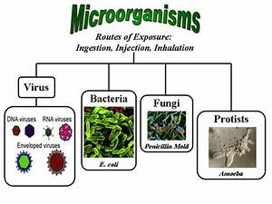 Useful Microorganisms - Role of Microorganisms in Human ...