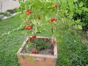 Planter Des Graines De Tomates : int r t planter des tomates en jardiniere photos de ~ Dailycaller-alerts.com Idées de Décoration