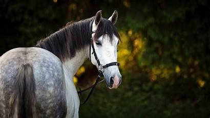 4k Horse Animal Wallpapers Animals Walls