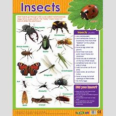 Educational School Posters  Insects Reference Chart For The Classroom