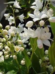 Plantes Grimpantes Pot Pour Terrasse : quel arbuste mettre en plein soleil ~ Premium-room.com Idées de Décoration