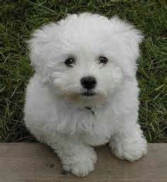 1000 images about my puppies on pinterest toy