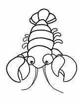 Coloring Lobster Shrimp Morphology Lobsters Body Commonly Crayfish Called Barong Ant Bull Segmented General Printable Gaddynippercrayons sketch template