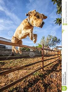 Dog jumping over fence stock photo image of brown over for Dog jumping fence