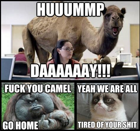 Funny As Fuck Memes - hump day is pissing off the rest of the animals funny meme funny memes