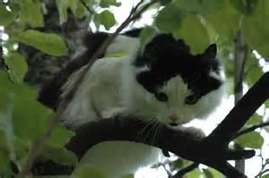 cat in a tree file cat in apple tree jpg
