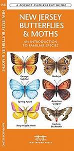 Pdf  A Pocket Guide To Butterflies Moths