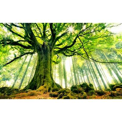 Beautiful Strange Tree Wallpaper