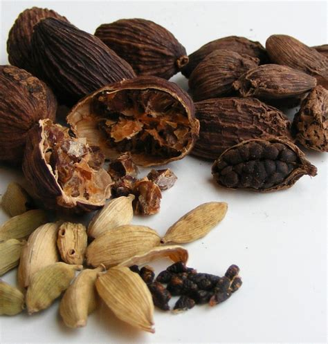 what is cardamom cardamom scienceandfooducla