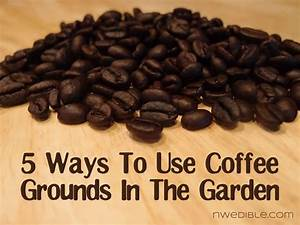 5 ways to use coffee grounds in the garden northwest