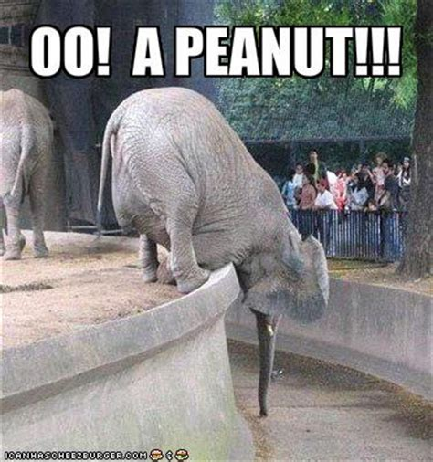 Elephant Meme - funny pictures beautifull pictures photography fun funny videos elephant picture