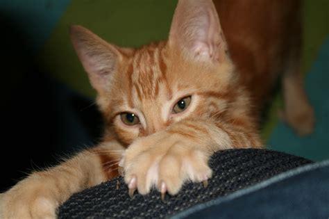 cat happy  protect  furniture