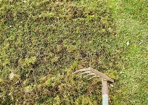Moos Im Rasen Beseitigen : rasenpflege vertikutieren moos entfernen vertikutierer ~ Lizthompson.info Haus und Dekorationen