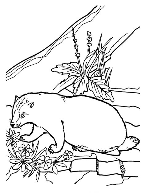 Baby Weasel Coloring Pages