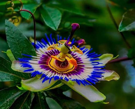 colorful flowers beautiful colorful flower photos nature babamail