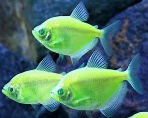Most Colorful Fish contest Saltwater versus Freshwater